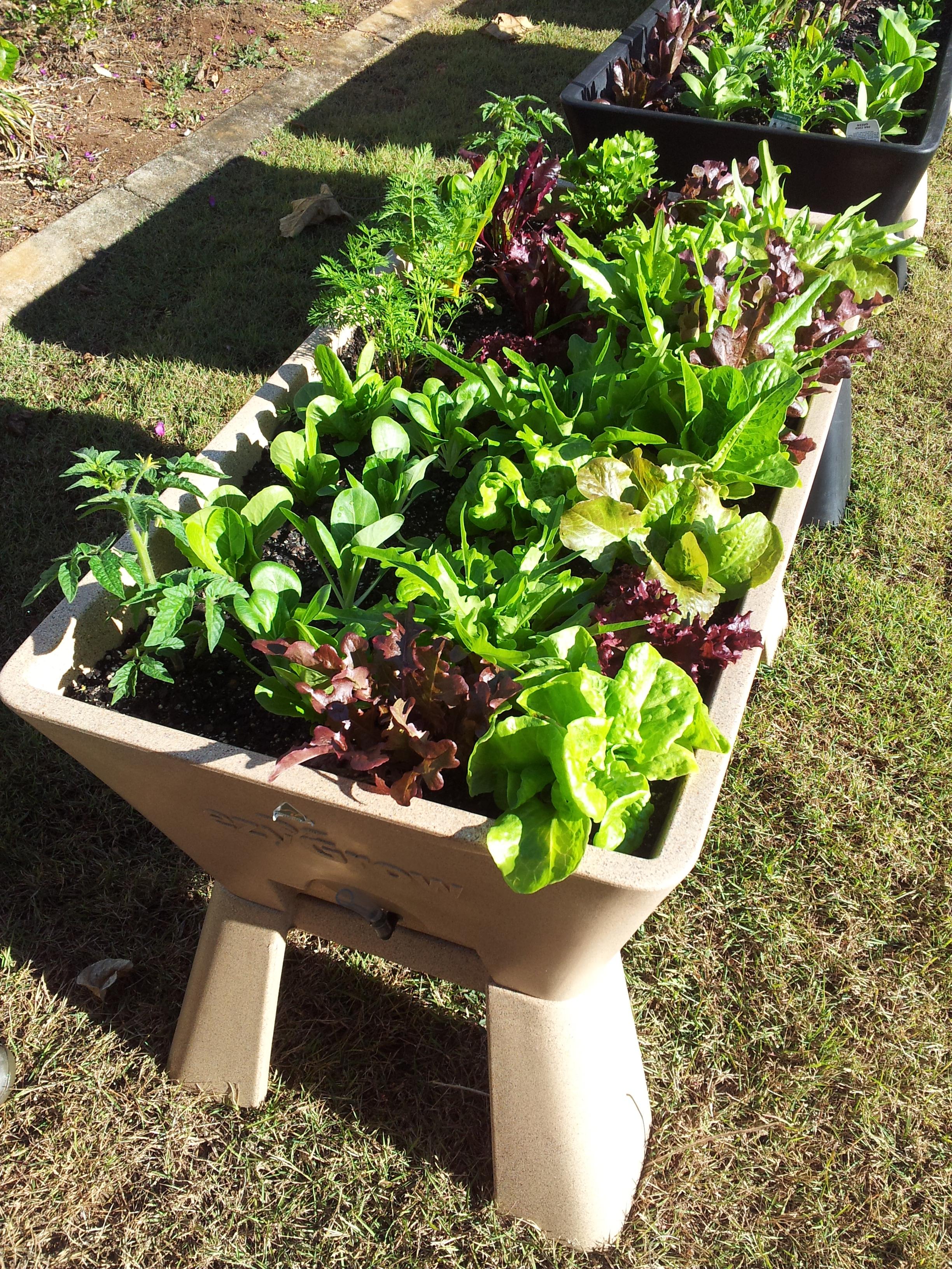 Garden Easi Planters 277