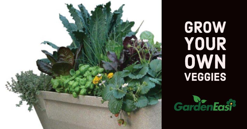 Grow Your Own Veggies With Garden Easi