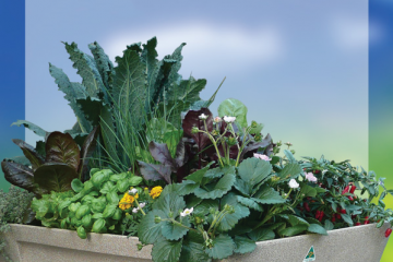 Garden-Easi-Planter-Boxes-We-Inspire-Healthier-Lives