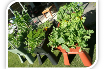Garden Easi Planter Box Veggies Growing Results